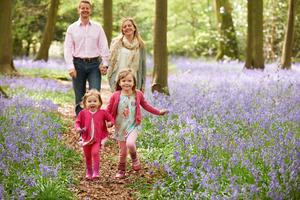 Carpets of bluebells bloom in spring at Killinthomas and at Moore Abbey